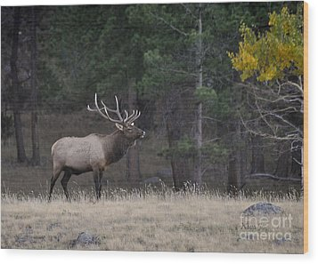 Wood Print featuring the photograph Lone Elk Warrior by Nava Thompson