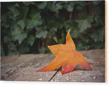Lone Leaf Wood Print