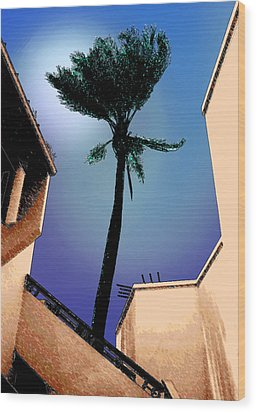 Lone Palm Wood Print by Ginny Schmidt