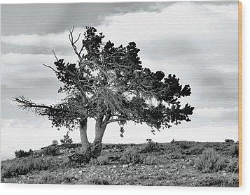 Lone Pine Tree Wood Print