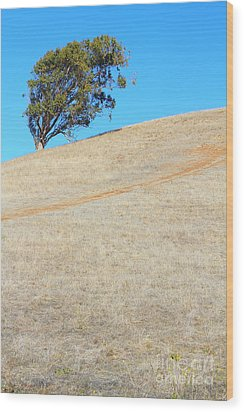 Lone Tree At Coyote Hills California . 7d10908 Wood Print by Wingsdomain Art and Photography
