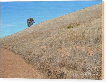 Lone Tree At End Of The Trail At Coyote Hills California . 7d10920 Wood Print by Wingsdomain Art and Photography