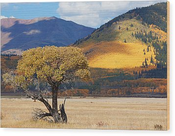 Wood Print featuring the photograph Lone Tree by Jim Garrison