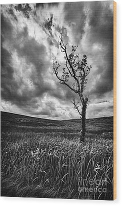 Lone Tree On The Ayrshire Moors Wood Print by John Farnan