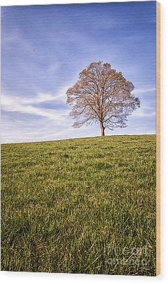 Lone Tree On The Hill Colour Wood Print by John Farnan