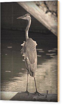 Lonely Flamingo Bird Wood Print by Radoslav Nedelchev