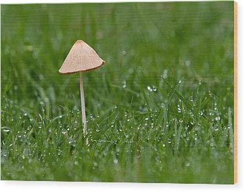 Lonely Mushroom Wood Print by Miguel Capelo