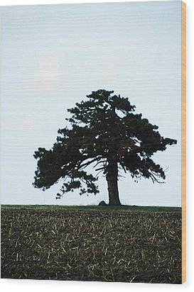 Lonely Tree #1 Wood Print by Todd Sherlock