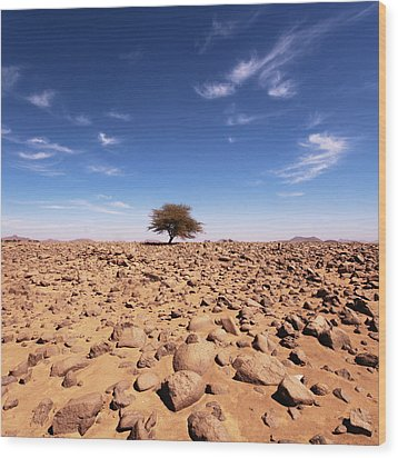 Lonely Tree At Sahara Desert Wood Print by Taghit