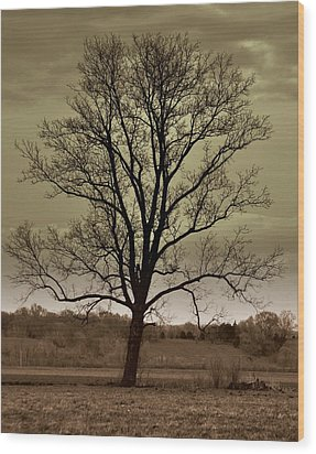 Lonely Tree Wood Print by Marty Koch