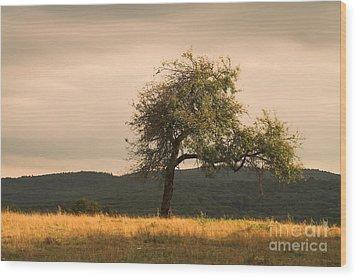 Lonely Tree Wood Print by Odon Czintos