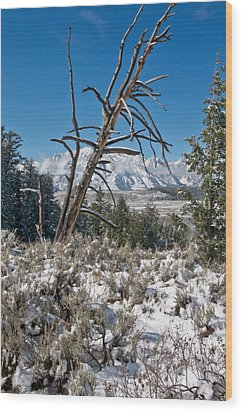 Lonesome Pine Wood Print by Jay Seeley