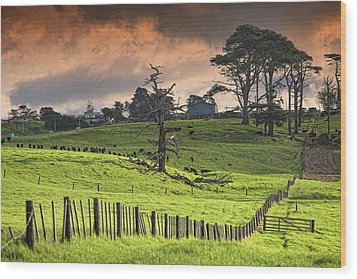 Long Bay Fields Wood Print by Mark Meredith
