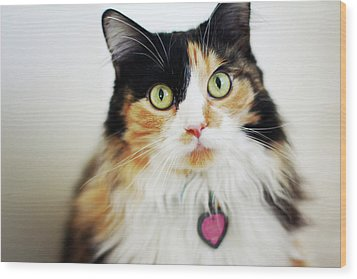 Long Haired Calico Cat Wood Print by Genevieve Morrison