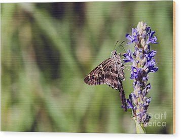 Long-tailed Skipper Butterfly Wood Print by Cindy Bryant