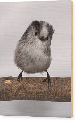 Long-tailed Tit Wood Print by Les Stocker