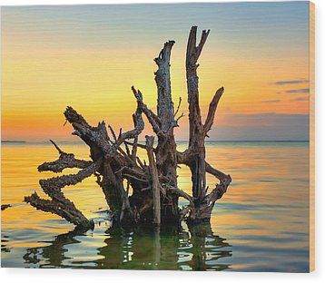 Longboat Key Tree Wood Print by Jenny Ellen Photography