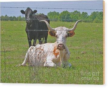Wood Print featuring the photograph Longhorn Resting by Val Miller