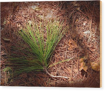 Longleaf Pine Needles Wood Print by John Myers
