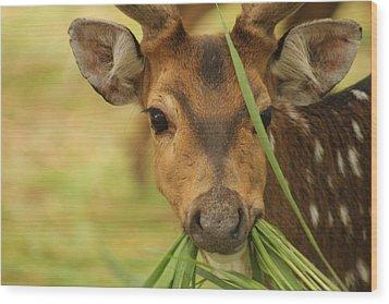 Looking At Me Wood Print by Mallika Rajasekaran
