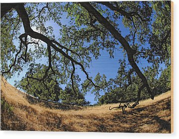 Looking Through The Oaks Wood Print by Donna Blackhall