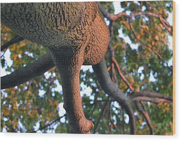 Looking Up Wood Print by Naomi Berhane