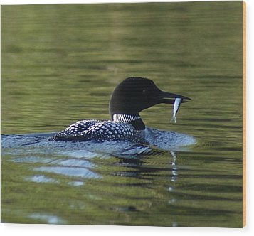 Loon With Minnow Wood Print by Steven Clipperton