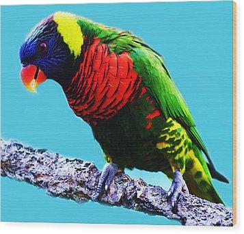 Lory Bird Wood Print by Paulette Thomas