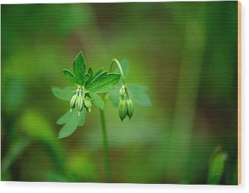 Wood Print featuring the photograph Lost But Not Forgotten by Vicki Pelham