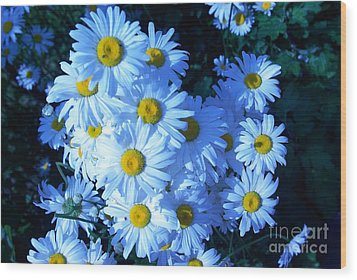 Lot Of Daisies Wood Print by AmaS Art