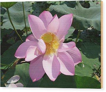 Lotus 1 Wood Print by Susan McNamara
