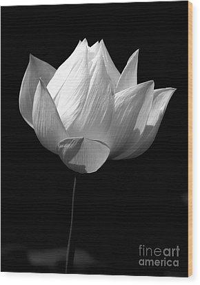 Lotus Bw Wood Print