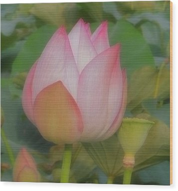 Lotus Flower Wood Print by Chad and Stacey Hall