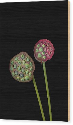 Lotus Seed Pod Wood Print by Jim McKinley