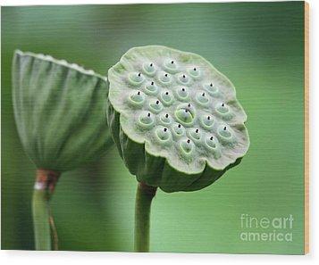 Lotus Seed Pods Wood Print by Sabrina L Ryan