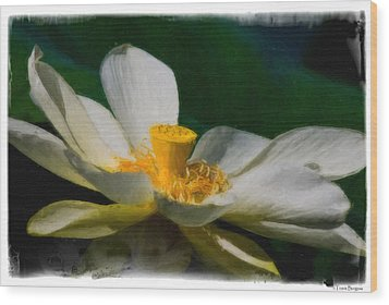 Wood Print featuring the photograph Lotus by Travis Burgess