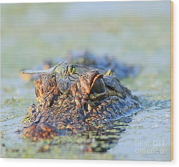 Wood Print featuring the photograph Louisiana Alligator With Dragon Fly by Luana K Perez