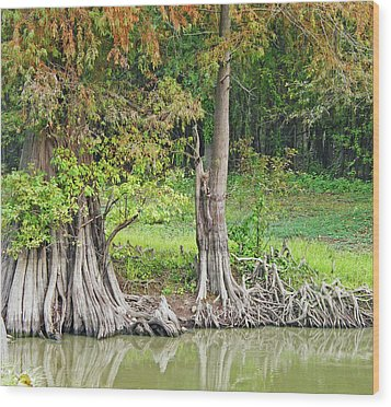 Wood Print featuring the photograph Louisiana Cypress by Lizi Beard-Ward