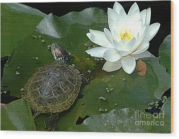 Lounging On A Lily Pad Wood Print by Tonia Noelle