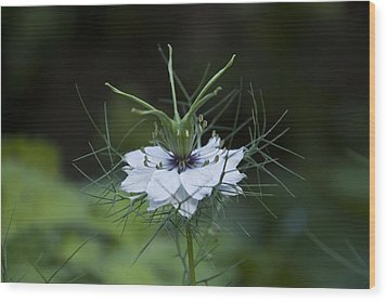 Wood Print featuring the photograph Love In A Mist by Rob Hemphill