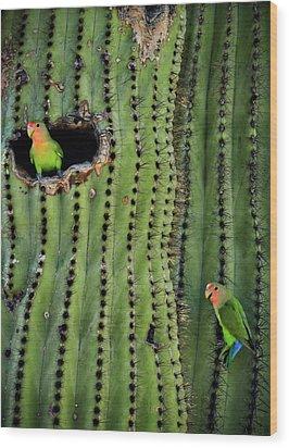 Lovebirds And The Saguaro  Wood Print