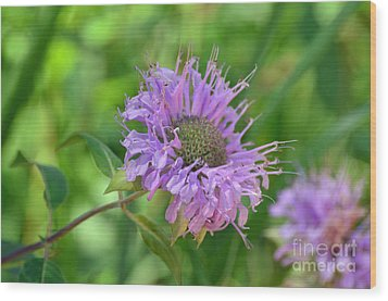 Lovely Lavender  Wood Print by Whispering Feather Gallery