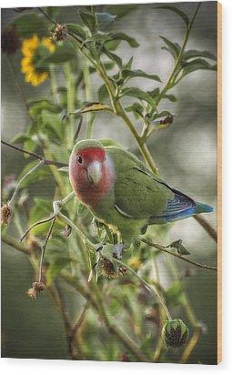 Lovely Little Lovebird Wood Print