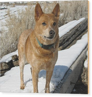 loyal Rusty - Red Heeler Wood Print