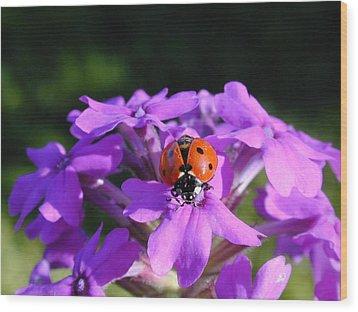 Lucky Ladybug Wood Print