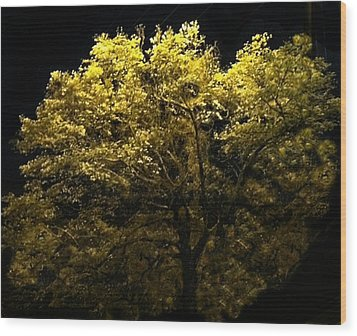 Wood Print featuring the photograph Luminescent Dogwood  by Elizabeth Coats