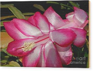 Luminous Cactus Flower Wood Print by Kaye Menner