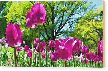 Luminous Purple Tulips In A Flower Garden And Sunny Green Trees Under A Blue Sky Wood Print by Chantal PhotoPix
