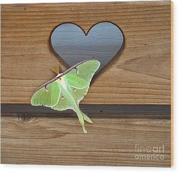 Luna Moth In Love Wood Print by The Kepharts