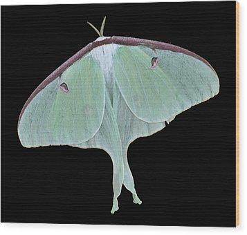 Luna Moth Wood Print by Paul Ward